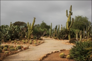 Mallorca Kaktus